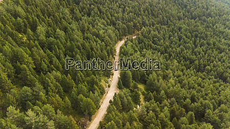 luftaufnahme des autofahrens durch pinien nationalpark