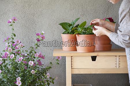 frau, die, sich, um, topfpflanzen, im, innengarten - 27625941