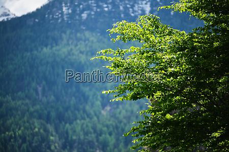 berglandschaft suedtirol italien