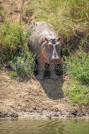 afrika serengeti tansania tier tierwelt saeugetier