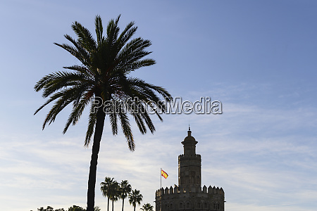 silhouette of palm tree and torre