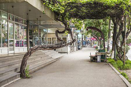 armenia yerevan tree growing out of