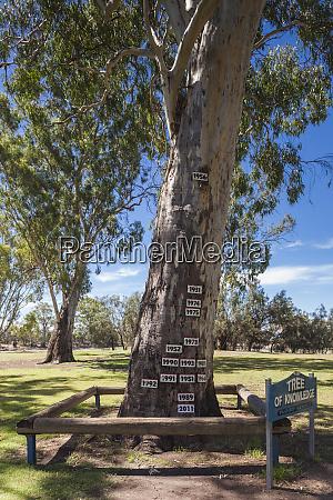 australien murray river valley loxton baum