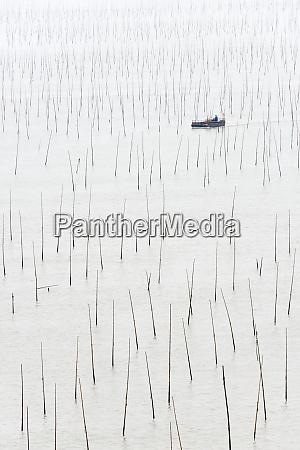 fishing boat going through bamboo poles