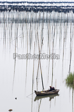 drying seaweed on the bamboo poles