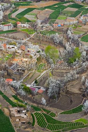 tibetan village houses with farmland and