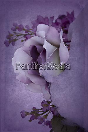 usa minnesota sandstein rose im schnee