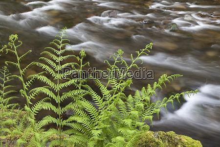 usa oregon columbia river gorge lady