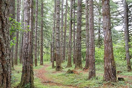 usa oregon springfield forest path fall
