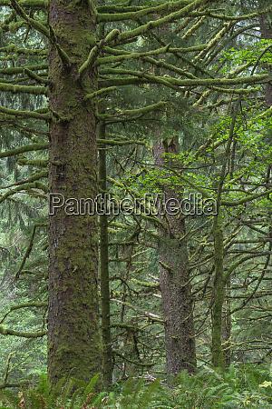 usa oregon siuslaw national forest cape