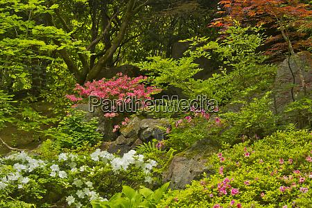 spring portland japanese garden portland oregon