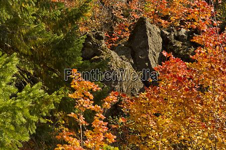 lava flow fall color santiam pass