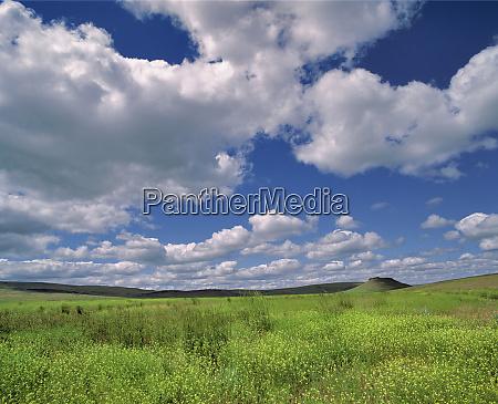 usa oregon harney co wild grasses
