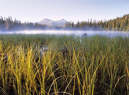 usa oregon scott lake pond grasses