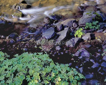 usa oregon north santiam river plants