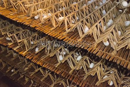 razing silkworms in the attic of