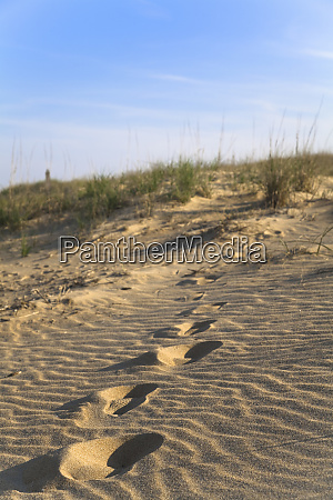 virginia beach va usa die