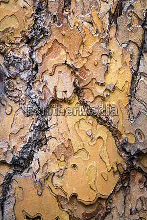 usa washington state wenatchee national forest