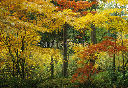washington park arboretum japanese garden maple