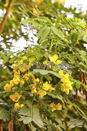 state of qatar doha yellow flowers