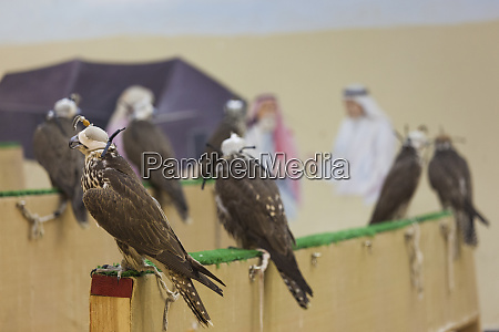 qatar doha falcon souq market of