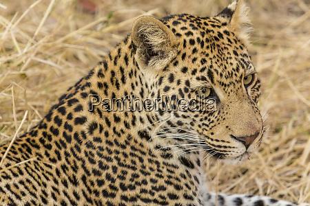 afrika suedafrika ngala private game reserve