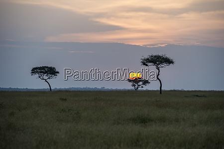afrika tansania