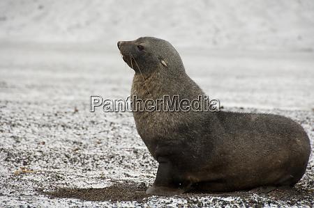 antarctica antarctic penninsula deception island
