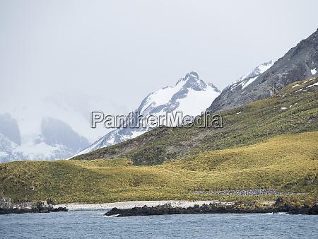 chinstrap, penguin, (pygoscelis, antarctica), in, der, nähe - 27732722