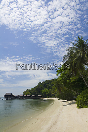 beach and palm trees palau pangkor