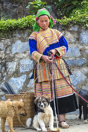 blume hmong frau verkaufen hunde sonntagsmarkt