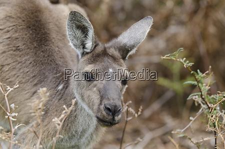 western australia perth yanchep nationalpark westliches