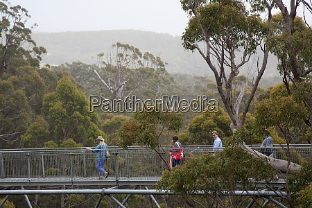 touristen geniessen valley of giants baumwipfelzufuss