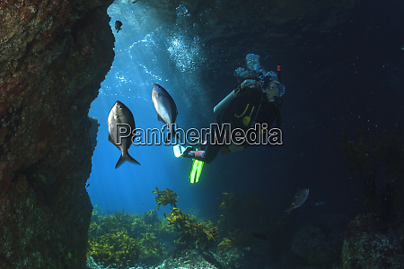 taucher schwimmen durch eine meereshoehle mit