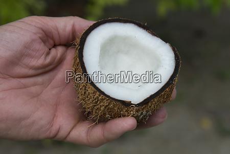 seychellen la digue lokale kokosnuss halbiert