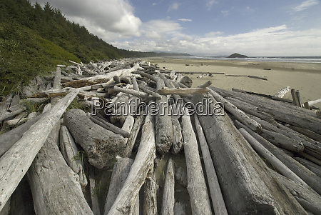 driftwood at long beach tofino british