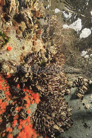 flaches wirbelloses meeresleben browning passage northern