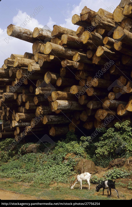 ghana:, kumasi, (ashanti, region), holzlager, mit, ziegen, im - 27756254