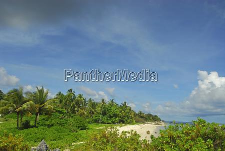 UEppige vegetation an einem weissen sandstrand