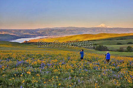 usa washington state photographers amid wildflowers