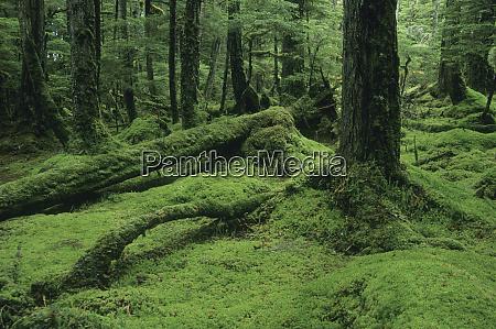alaska, tongass, national, forest, w., brothers, island, südosten, moosig, gemäßigter - 27781704