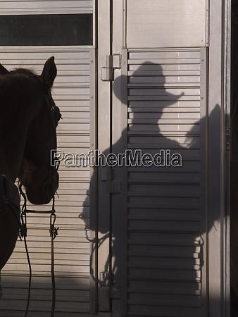tucson arizona schatten eines pferdes und