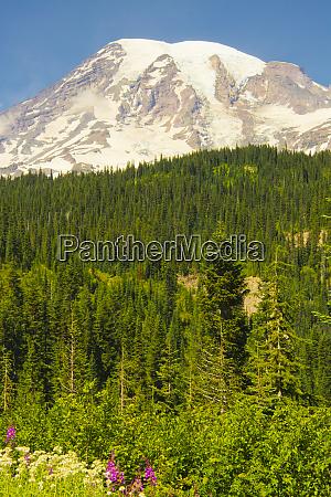 mount rainier and wildflowers louise lake