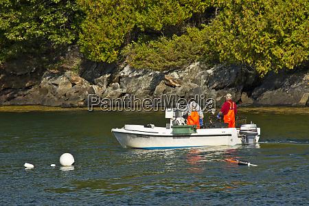 crabbing great island casco bay brunswick