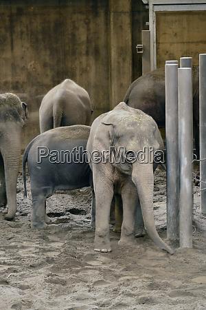 usa oregon portland elephants in oregon