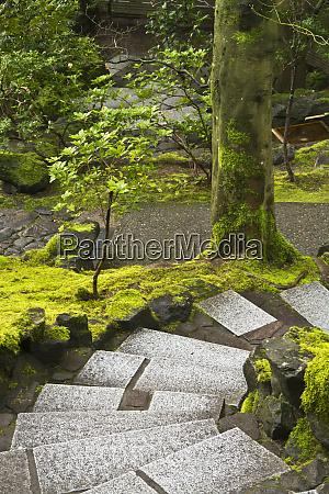 downward steps natural garden portland japanese