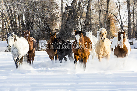 usa wyoming shell a herd of