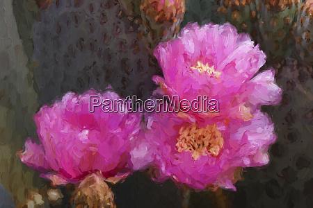 malerei-effekt, auf, beavertail, prickly, birne, kaktus - 27814696