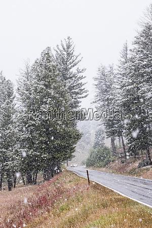 yellowstone national park wyoming usa snowfall