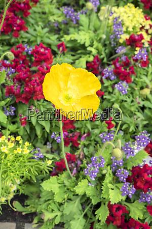 longwood, gardens, island, mohn, kennett, square, pennsylvania, usa - 27815294